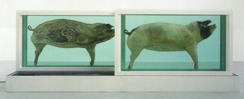 Damien Hirst. Pigs
