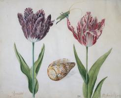 Якоб Маррел. Два тюльпана, раковина и насекомое