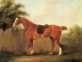 Джон Ност Сарториус. Конь охотника привязный к забору