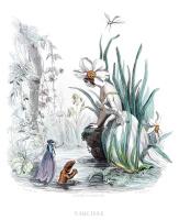 """Жан Иньяс Изидор (Жерар) Гранвиль. Нарцисс. Серия """"Одушевленные цветы"""""""