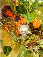 Тони Оливер. Птицы строят гнезда 09