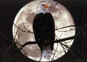 Барри Чал. Птица и лунный свет