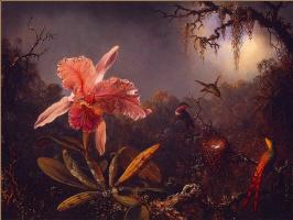 Мартин Джонсон Хед. Орхидея Каттлея и три колибри