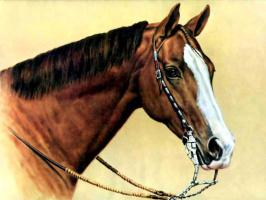 Дональд Шварц. Лошадь 4