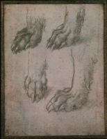 Леонардо да Винчи. Зарисовки лап собаки и волка