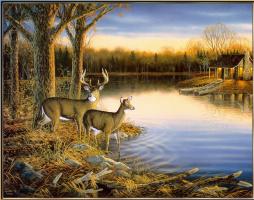 Сэм Тимм. Спокойный вечер белохвостого оленя