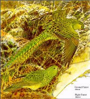 Тони Оливер. Австралийские вымирающие виды 01