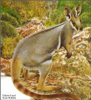 Тони Оливер. Австралийские вымирающие виды 21