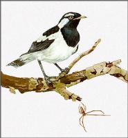 Тони Оливер. Черно-белая птица