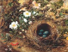 Джон Уильям Хилл. Гнездо птиц