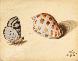 Балтазар ван дер Аст. Бабочка и раковина