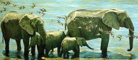 Роберт Бейтман. Слоны