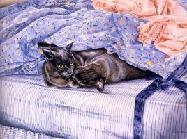 Лесли Фотерби. Кошки в голубом