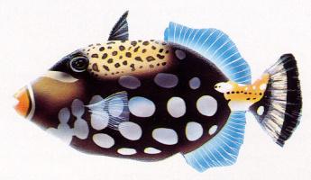 Адриан Дей. Рыба