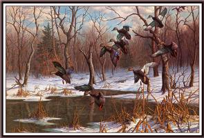 Гарри  Адамсон. Черные утки