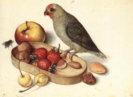 Георг Флегель. Натюрморт с попугаем