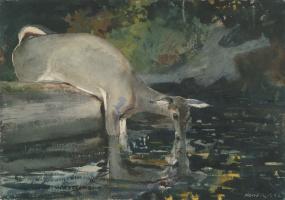 Winslow Homer. Drinking deer