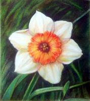 Sophie Wasilewska. Daffodil