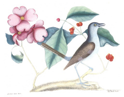 Марк Катсби. Птица