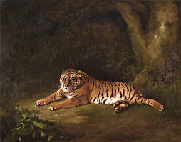 Джордж Стаббс. Тигрица