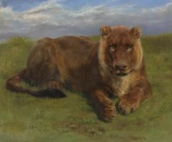 Роза Бонёр. Отдыхающая львица