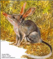 Тони Оливер. Австралийские вымирающие виды 23