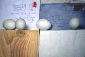 Тед Сет Джейкобс. Яйца