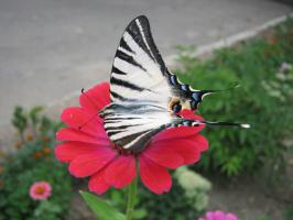 """Алексей Иванович Гришанков (Alegri). """"Butterfly in the city"""""""