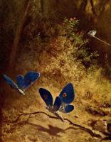 Карл Шпицвег. Ловец бабочек. Фрагмент