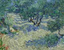 Vincent van Gogh. Plantation of olive