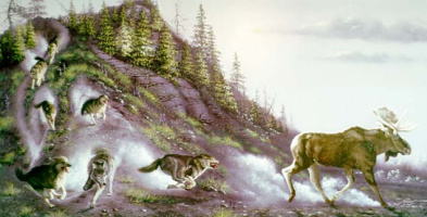 Дональд Руст. Волчья охота