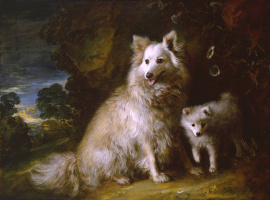 Thomas Gainsborough. Two dogs – beach and poppy (Pomeranian female puppy)