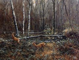 Питер Верстаппен. Природа 16
