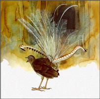 Тони Оливер. Большая птица-лира