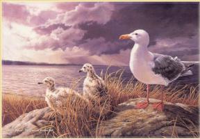 Марла Уилсон. Чайки