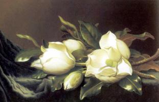 Мартин Джонсон Хед. Цветы