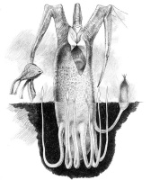 Уэйн Дуглас Барлоу. Дерево-мясник
