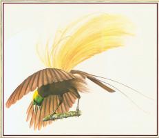 Питер Барретт. Большая птица
