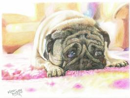 """Ирина Владимировна Хазэ. Picture """"Sad eyes"""" with a pug"""