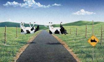 Боб Питерс. Переход крупного рогатого скота