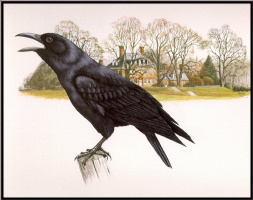 Дуглас Пратт. Ворона