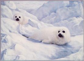 Чарльз Фрейс. Мир на льду