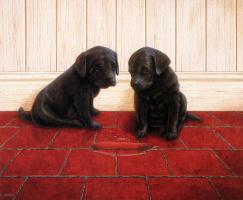 Найджел и Даниэль Кевин Хемминг. Два щенка