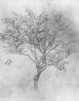 Сэр Фредерик Лейтон. Эскиз лимонного дерева