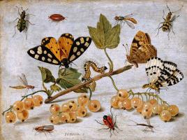 Ян ван Кессель Старший. Насекомые и фрукты
