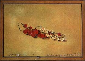 Ягоды красной и белой смородины