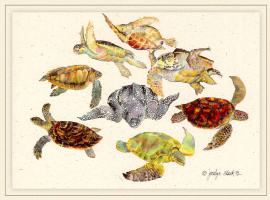 Джоселин Слек. Морские черепахи
