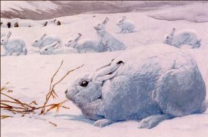 Луи Агассис Фуертес. Арктические зайцы