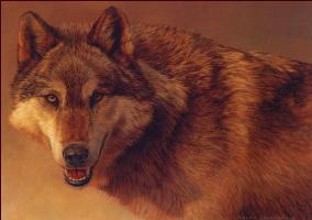 Калон Боган. Серый волк