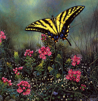 Стивен Лиман. Яркая бабочка